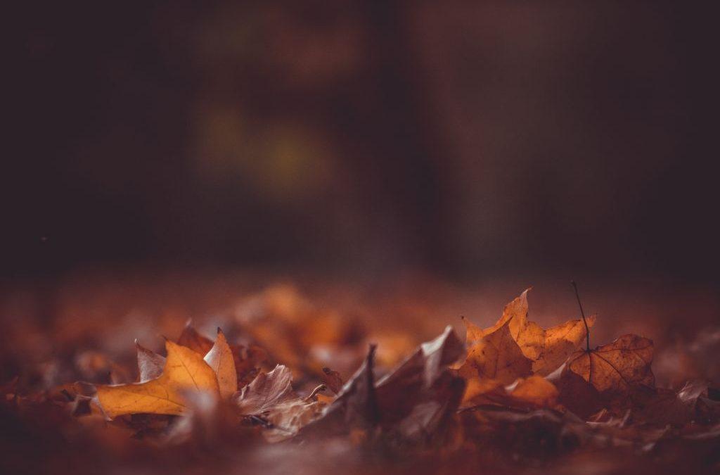 L'octubre